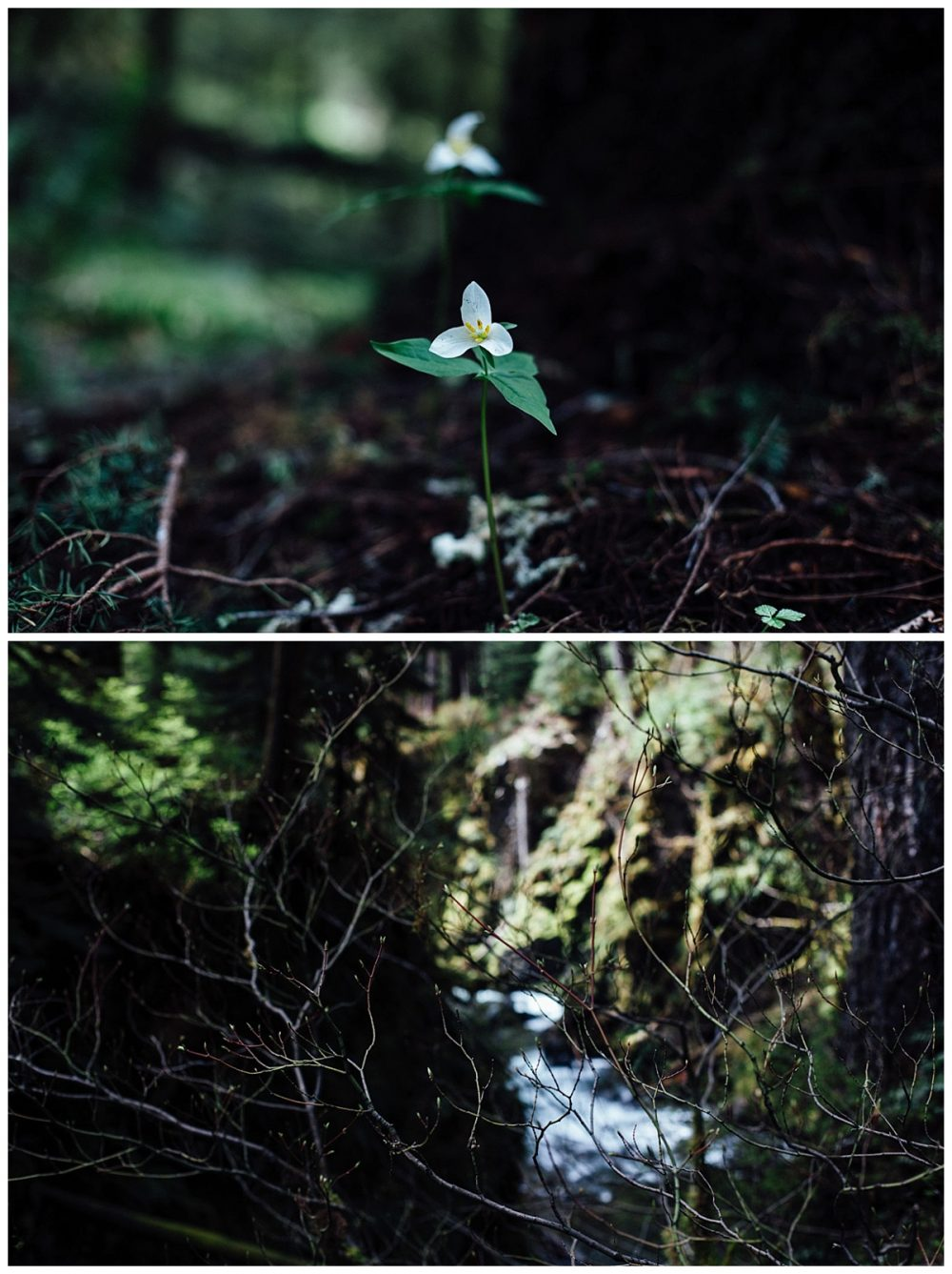 Long Weekend – Olympic National Park