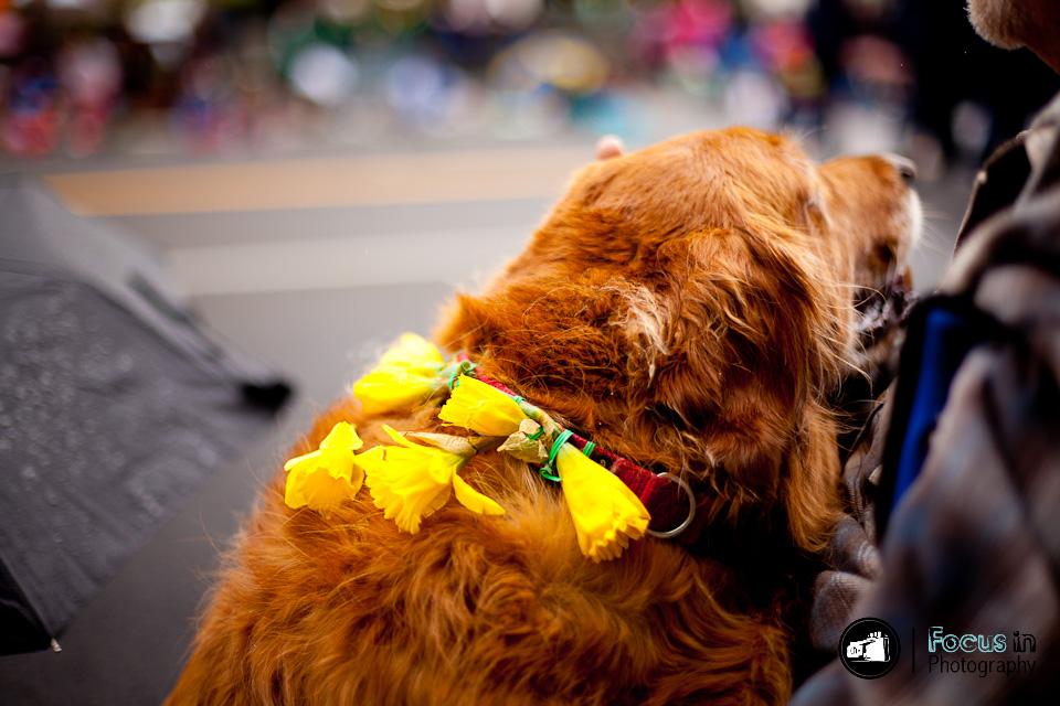 Tacoma Daffodil Parade | Street Photography
