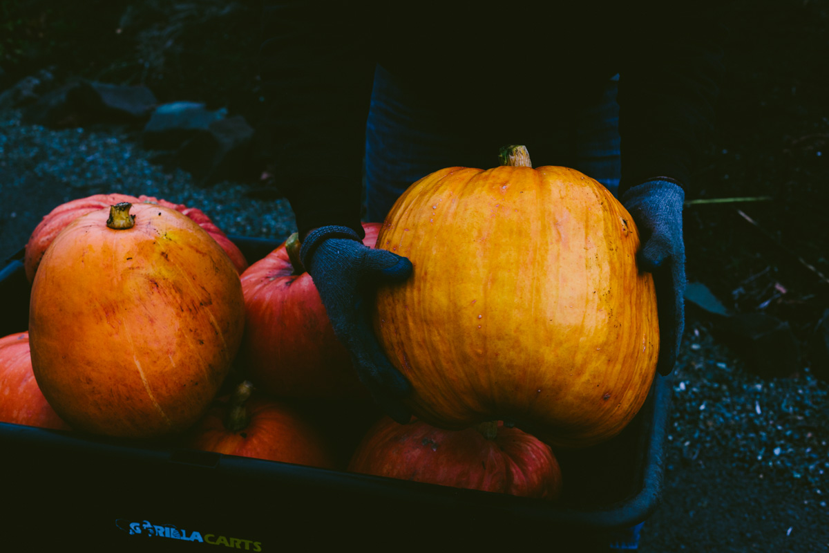 pumpkinharvest2016-20-of-25