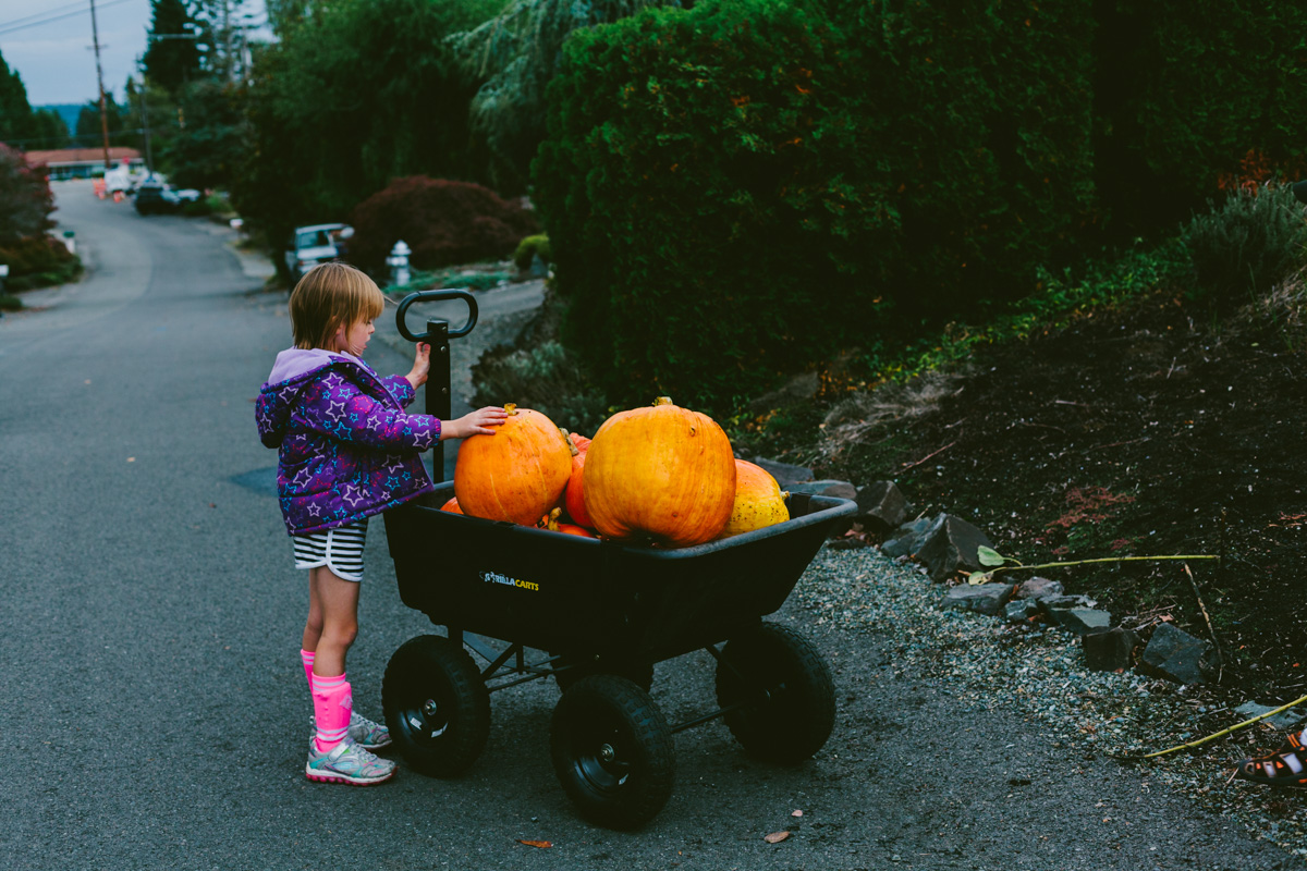 pumpkinharvest2016-21-of-25