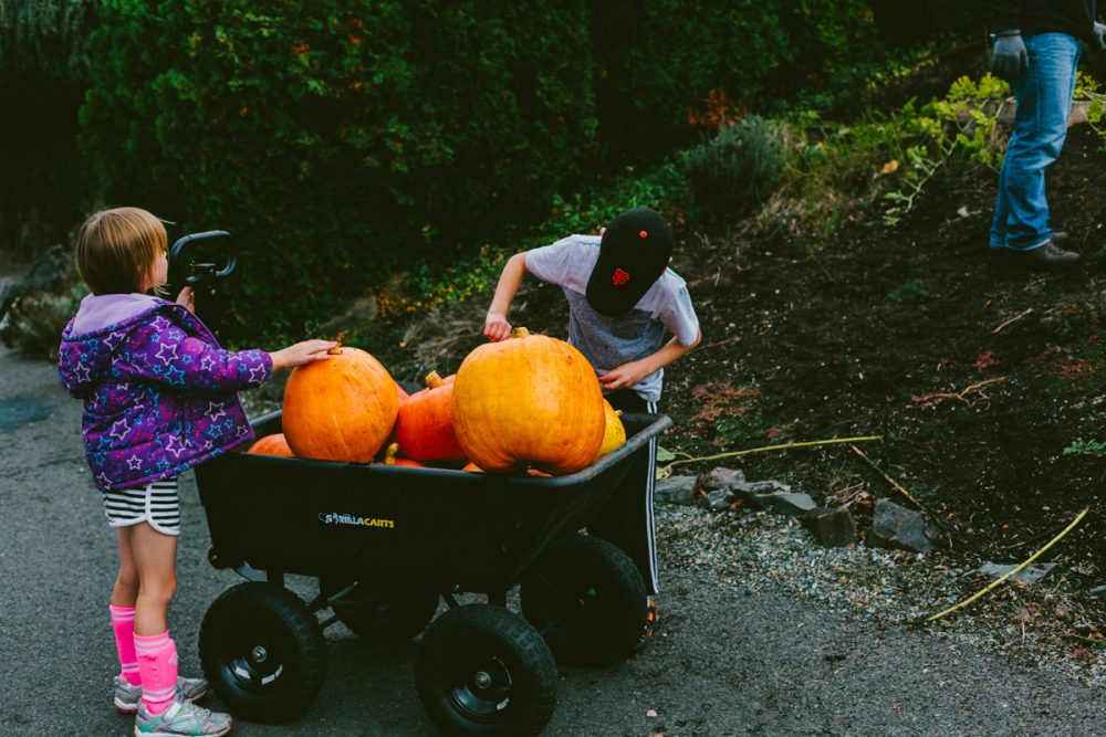 Front Yard Pumpkin Patch – Tacoma Family Photography