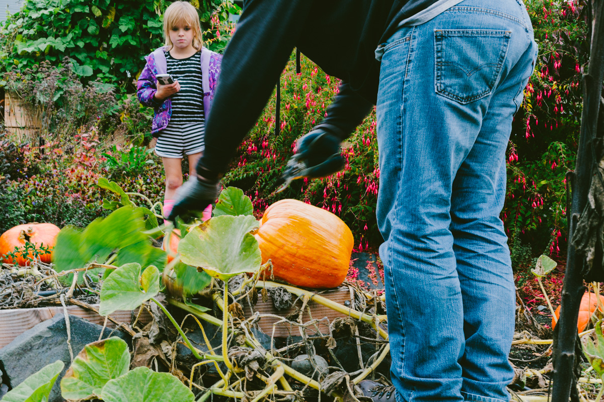 pumpkinharvest2016-8-of-25